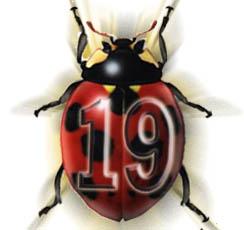 19 sayısına akıllarına ihanet edenler, nankör ve münafıklar tanık olamaz. Onlar için fitne olarak rahatsız eder.