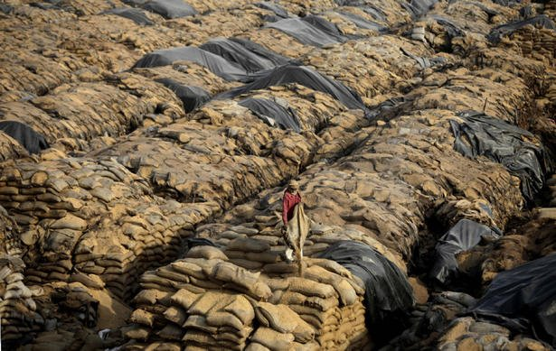 Capitalism let millions tons of grain rot in india